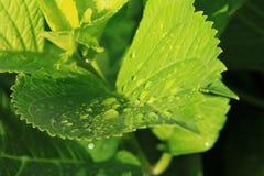 вода макроса листьев 4 падений предпосылки голубая Стоковые Фотографии RF