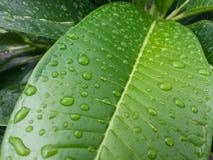 вода макроса листьев 4 падений предпосылки голубая Стоковое Фото