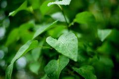 вода макроса листьев 4 падений предпосылки голубая Стоковое фото RF