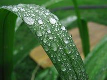 вода макроса листьев 4 падений предпосылки голубая Стоковая Фотография RF