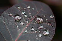 Вода макроса падает на темноту - красные лист Стоковые Изображения RF