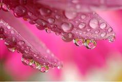 вода макроса цветка падения Стоковое Изображение