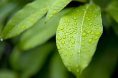 Вода на листьях стоковое фото rf