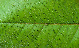 Вода на лист Стоковое фото RF