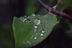 Вода на лист стоковое фото