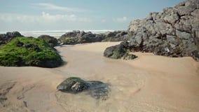 Вода океана с водорослями и утесами видеоматериал
