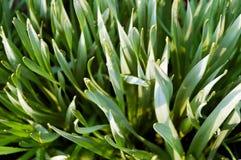 вода отражения зеленого цвета травы падения adobergb Стоковое фото RF