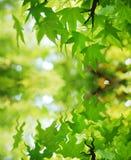 вода отражения листьев Стоковое Фото