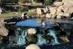 Вода падает в Аризону Стоковое Фото
