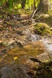 Вода падает каскад на тропическом лесе Стоковые Фото