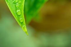 Вода падений на зеленом цвете выходит предпосылка Стоковые Изображения