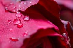 вода падения красная розовая Стоковые Фотографии RF