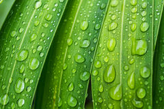 Вода падения на природе лист свежей Стоковое Фото