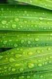 Вода падения на природе лист свежей Стоковая Фотография RF