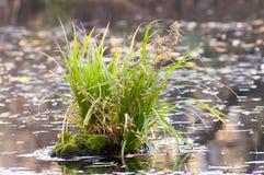 Вода пня ростка Стоковое Изображение RF