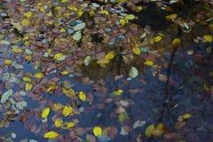 Вода покрашенная упаденными листьями Стоковое Изображение RF