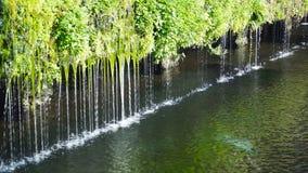 Вода пропуская над травой, заводом акции видеоматериалы