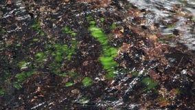 Вода пропуская над утесом с съемкой мха плотной сток-видео