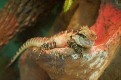 вода дракона восточная Стоковая Фотография RF