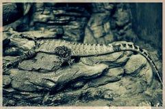 вода дракона восточная Стоковое Фото