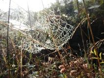 Вода росы утра падает на сеть паука на заводе Стоковое Изображение RF