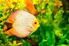 Вода рыб моря Стоковая Фотография