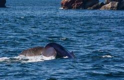 Вода свертывая с кабеля кита Стоковые Изображения