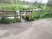 Вода собаки Лабрадора идя Стоковое фото RF