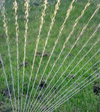 Вода спринклера распыляя на траве в поле Стоковое Изображение