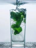 Вода с мятой в стекле стоковое изображение rf