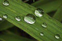 вода травы капек Стоковая Фотография RF