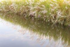 Вода травы цветка отражений Стоковая Фотография RF