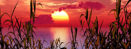 вода травы Стоковые Фото