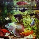 Вода черноты аквариума белых рыб красная оранжевая Стоковые Фото