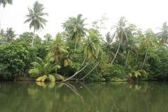 вода яркого захода солнца реки качества слоя джунглей иллюстрации пущи плотного тумана высокого супер тонкая уникально Стоковые Фотографии RF