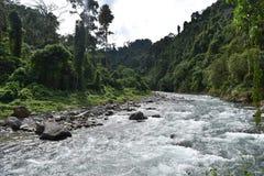 вода яркого захода солнца реки качества слоя джунглей иллюстрации пущи плотного тумана высокого супер тонкая уникально Стоковая Фотография RF
