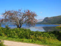 Вода Derwent, район озера, Англия Стоковое Изображение