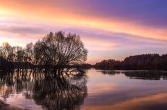 Вода flooding и крупный план дерева Стоковая Фотография RF