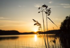 Вода Reed на заходе солнца Стоковые Изображения