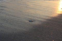 Во время отлива на заходе солнца Стоковые Фото