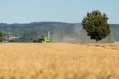 Во время сбора, зернокомбайн косит зрелую пшеницу в поле стоковое изображение