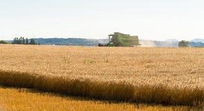 Во время сбора, зернокомбайн косит зрелую пшеницу в поле стоковые изображения rf