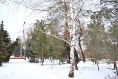 Волгоград, взгляд зимы Стоковое фото RF
