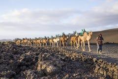 Водитель верблюда направляет караван верблюда через вулканическую область Стоковая Фотография