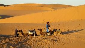 Водитель верблюда с 2 верблюдами в пустыне песка Стоковое Изображение