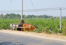 Водитель тележки на плантации плодоовощ дракона Стоковая Фотография