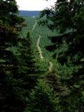 Водить тропы покатый стоковая фотография rf