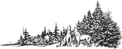 Волки завывать Стоковое Изображение RF