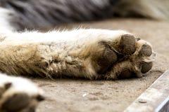 Волк и собаки волка в зиме Стоковые Изображения
