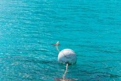 Волна воды воздушного шара в море Стоковые Изображения